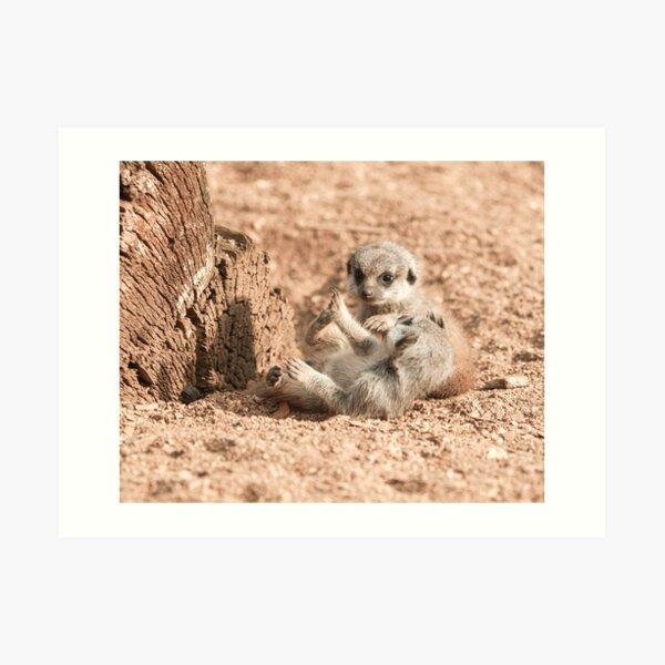 Meerkat Pups Photography  Art Print