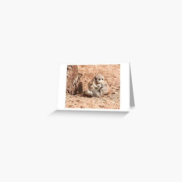 Meerkat Pups Photography  Greeting Card