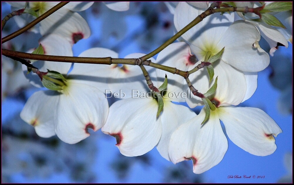 Dogwood's Behind by Deb  Badt-Covell