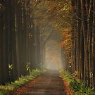 On the lane towards autumnal splendour by jchanders