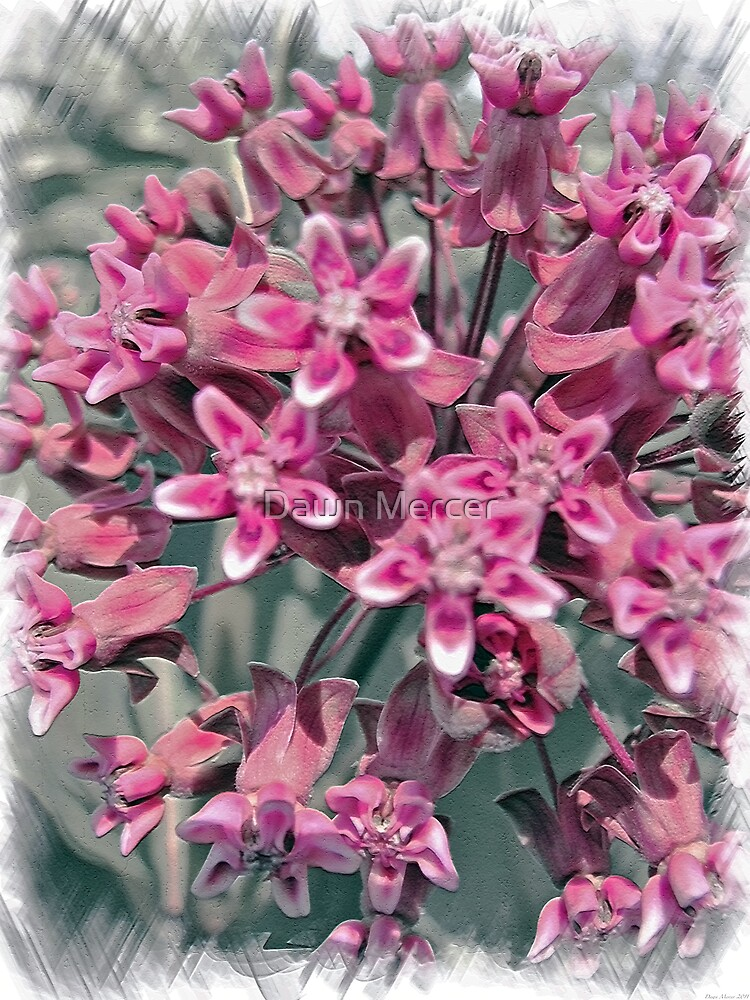Pink Perennial by MissDawnM