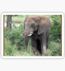 The Elephant {Loxodonta Africana} Sticker