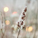 Winter's Icy Breath by Tamara Brandy