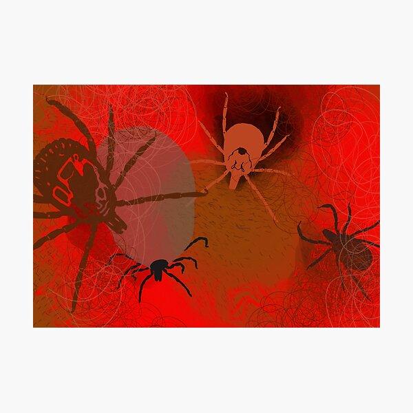 Ticks Photographic Print