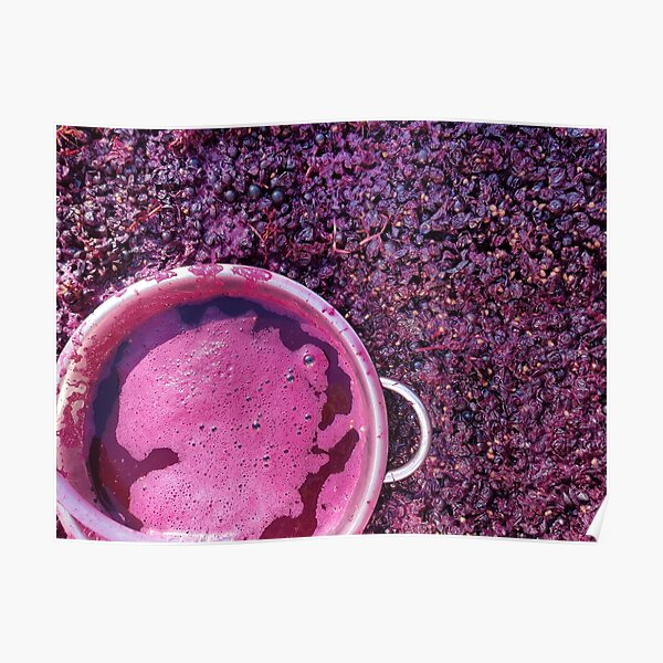 Shiraz Starting Ferment - Adelaide Hills Wine Region - Fleurieu Peninsula -by South Australian artist Avril Thomas Poster