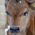 Baby Moo by AndreaEL