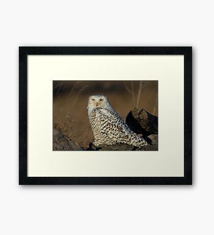 Snowy on the Rocks - Amherst Framed Print