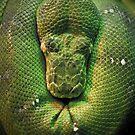 Snake001 by Vincent Bayliss