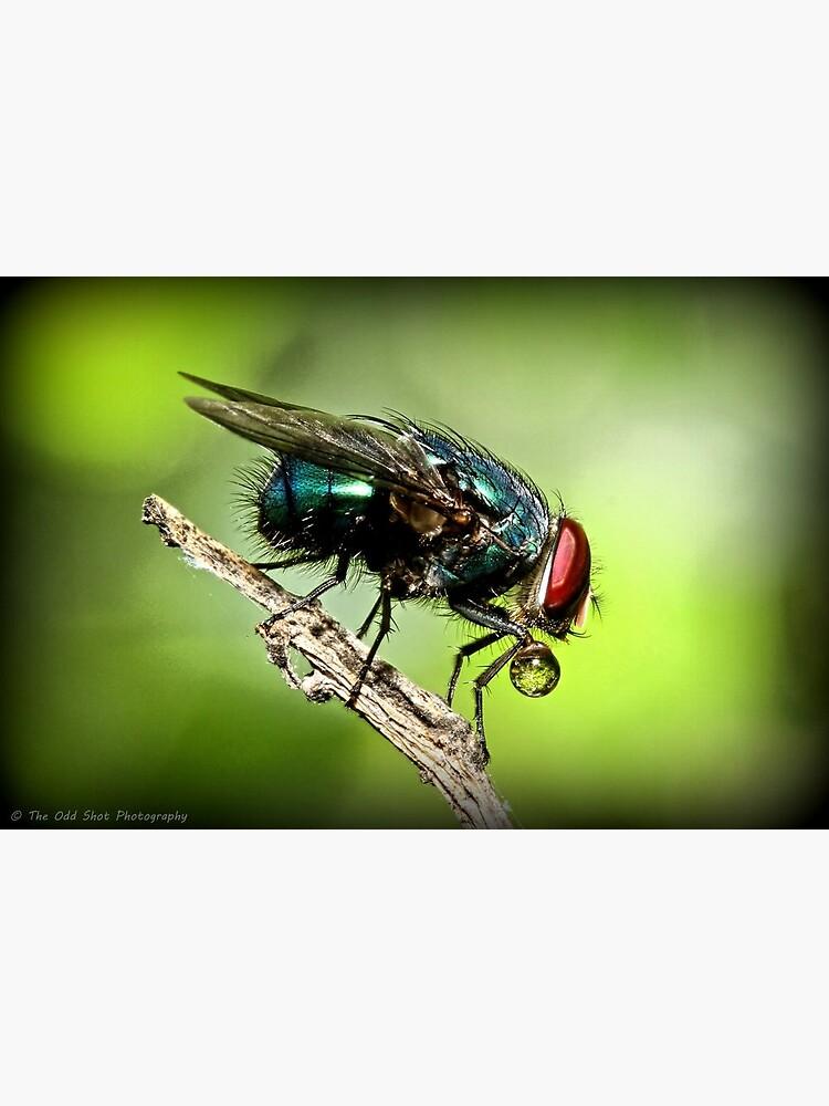 Fly by theoddshot