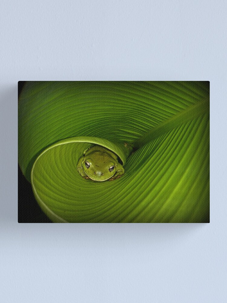 Alternate view of Frog in banana leaf Canvas Print