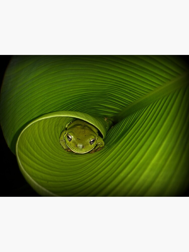 Frog in banana leaf by theoddshot