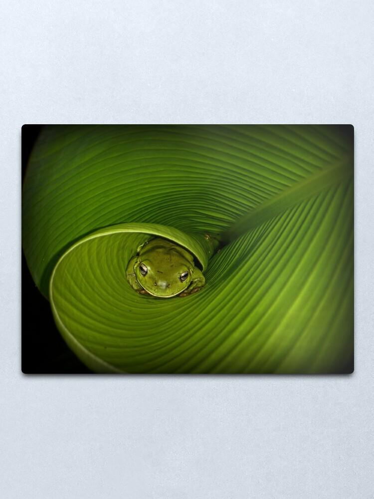 Alternate view of Frog in banana leaf Metal Print