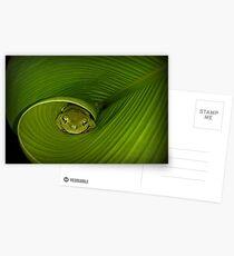 Frog in banana leaf Postcards