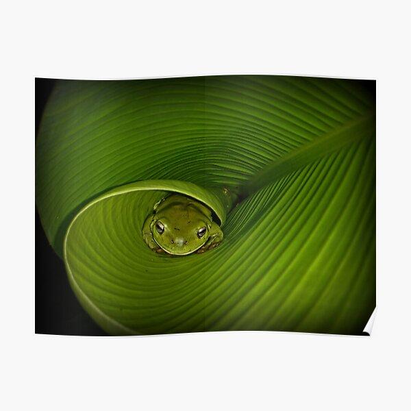 Frog in banana leaf Poster