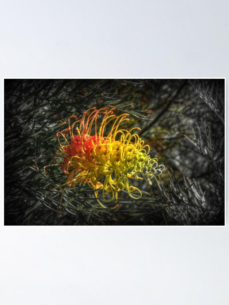 Alternate view of Grevillia flower Poster