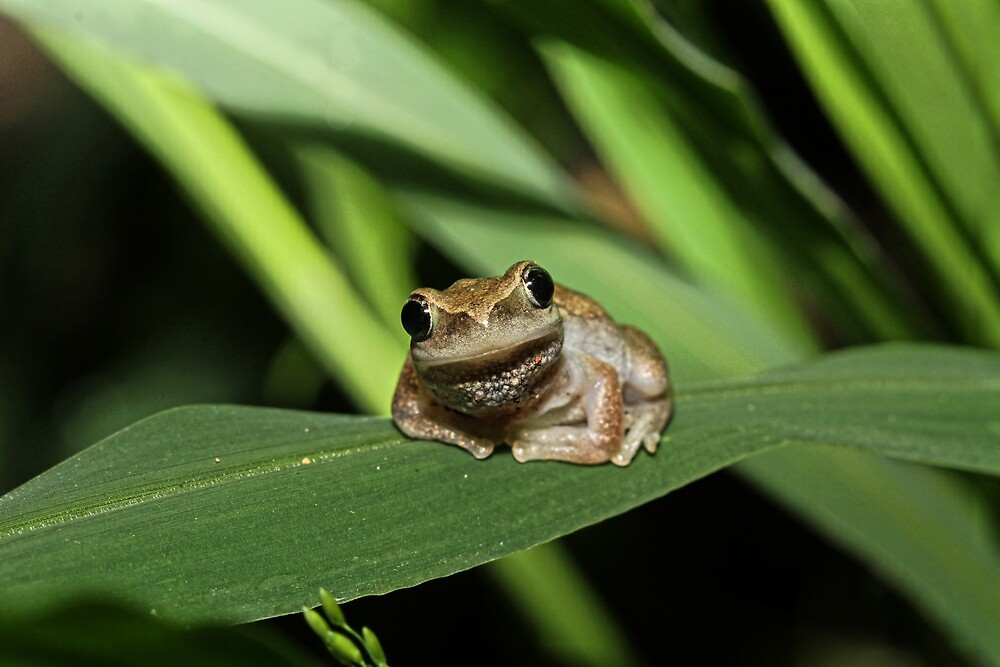 Hello Frog by Trevor Farrell