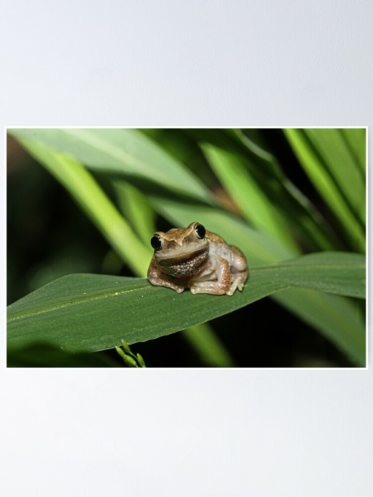 Alternate view of Hello Frog Poster