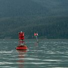 Sea Lions, Juneau by SusanAdey