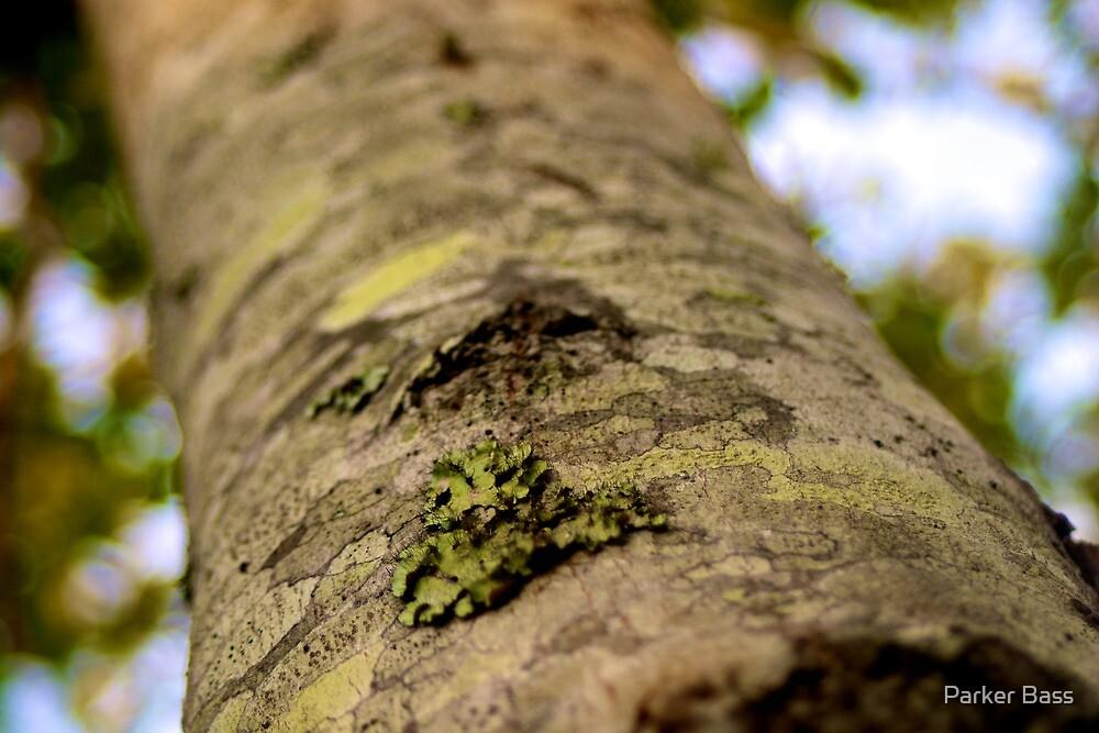 Tree Bark by Parker Bass