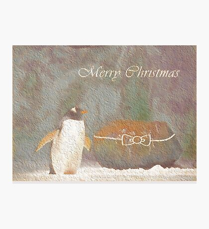 Cave Dweller Penguin (With Rock Gift) Photographic Print
