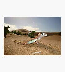 Gecko on Desert Dune - Namibia Photographic Print