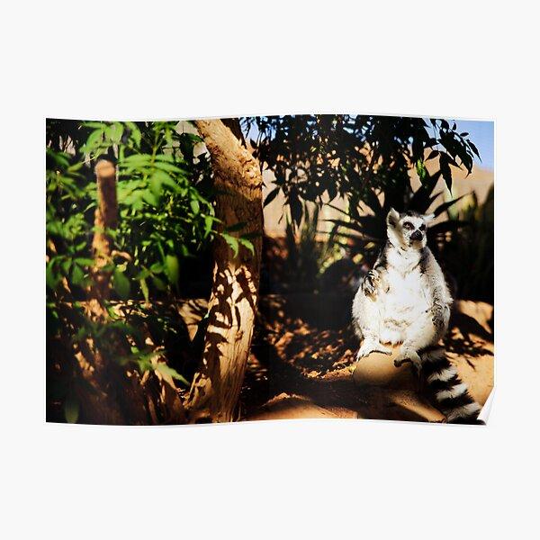 Larry the Lemur Poster