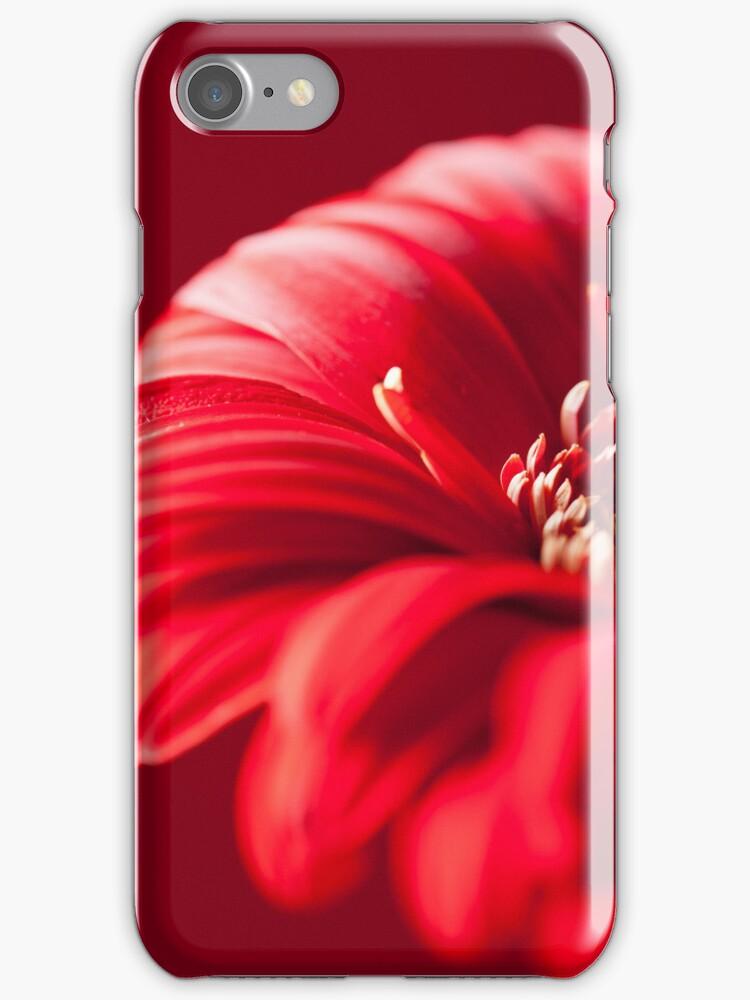 Gerbera 1 (IPhone Case) by Jacinthe Brault