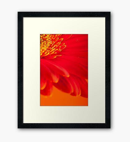 Gerbera 2 Framed Print