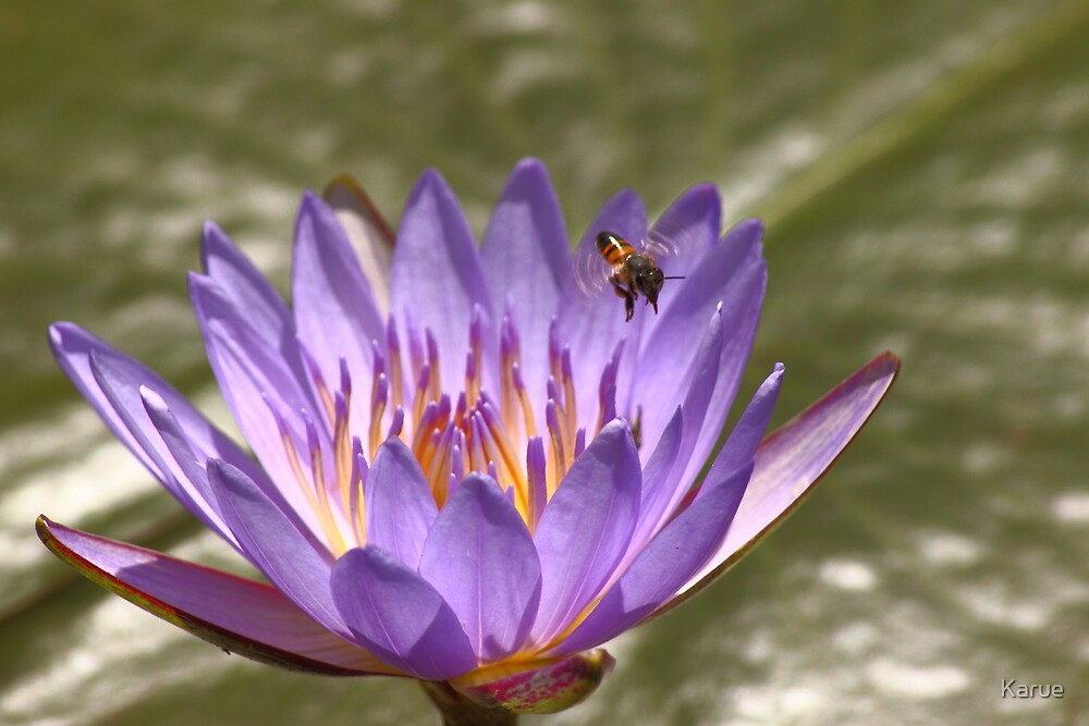 The flower and the bee! by Karue