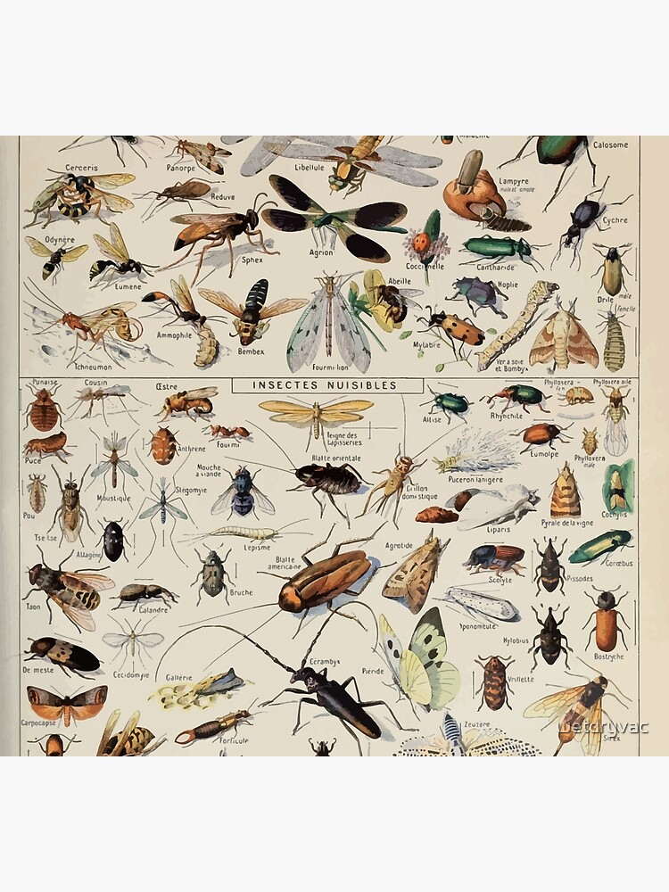 Adolphe Millot insectes by wetdryvac