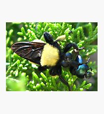 Macro Insects Photographic Print