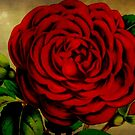 I Love You ~ Happy Valentine's Day by Debbie Robbins
