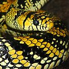 Yellow and black snake by MaaikeDesign