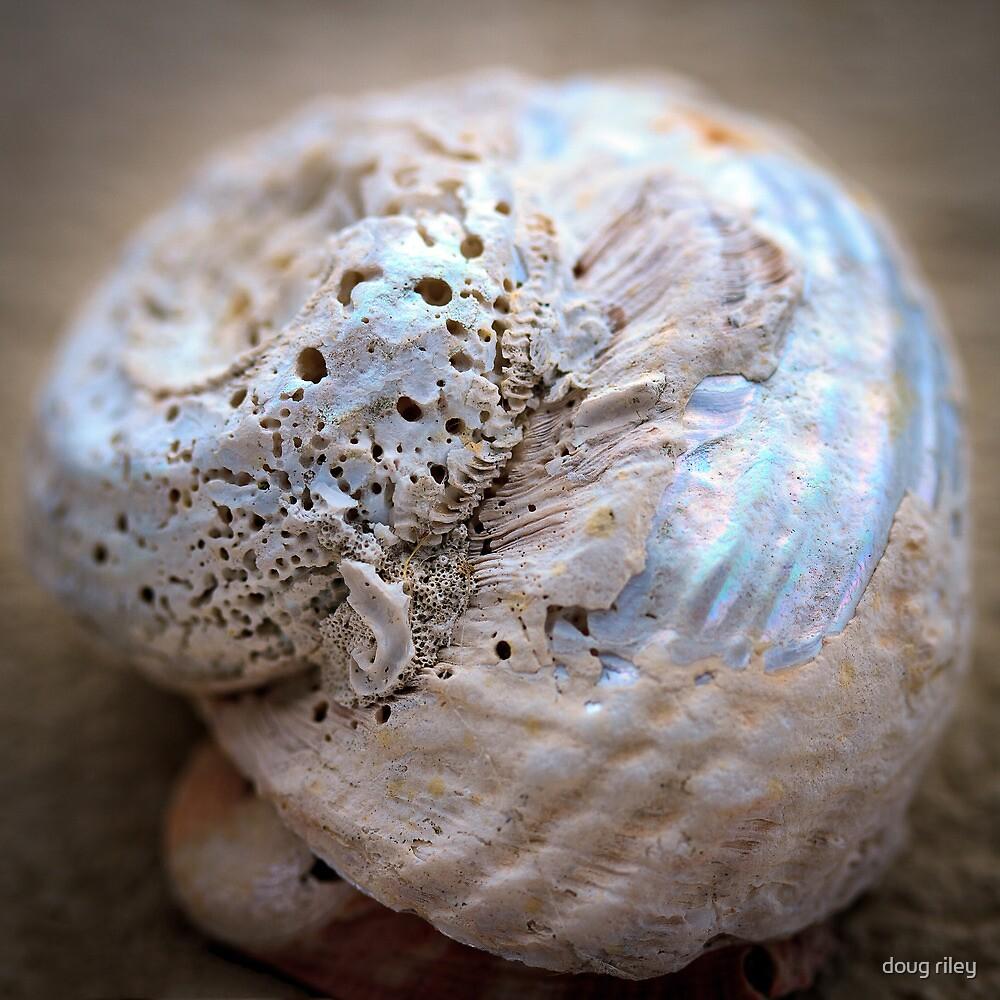 she sells - sea shells by doug riley