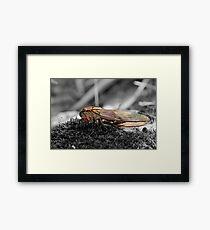 Lone Cicada Framed Print