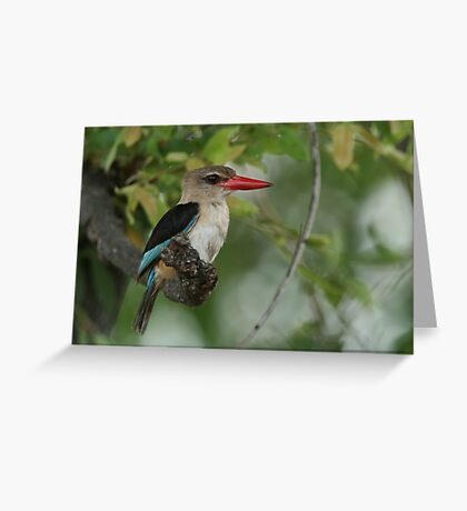 Brown-hooded Kingfisher Greeting Card