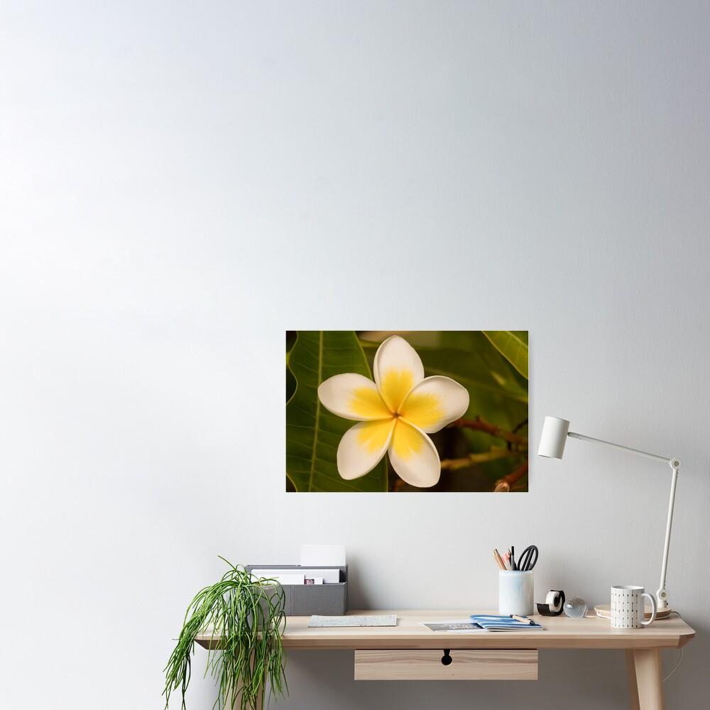 frangipani too Poster