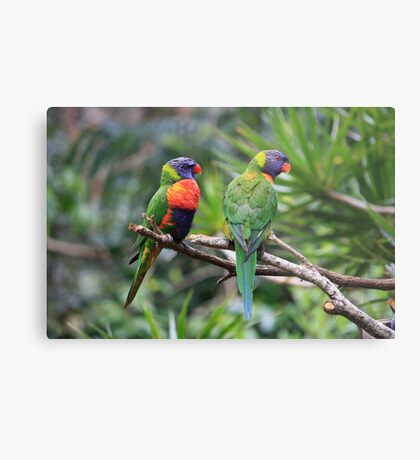 Birds: Mates In The Rainforest Metal Print