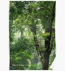 Rainforest in Tallebudgera Valley Poster