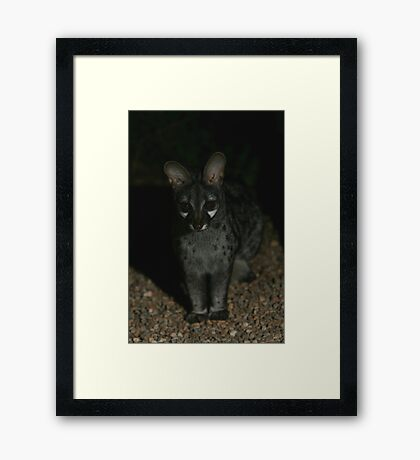Small-spotted Genet Framed Print