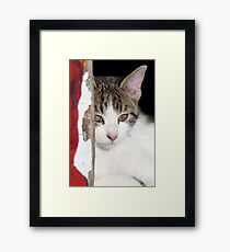 Sweet Kitty Framed Print