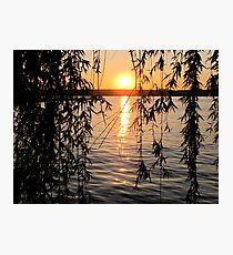 Willow sunset Photographic Print