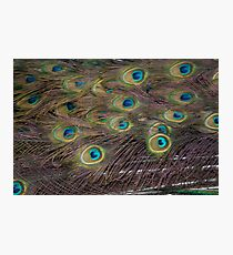 Eyes to intimidate Photographic Print