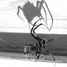 Shadow by Grinch/R. Pross