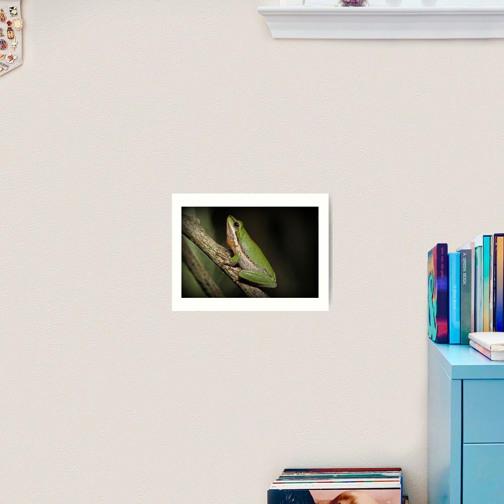 Frog on Branch Art Print