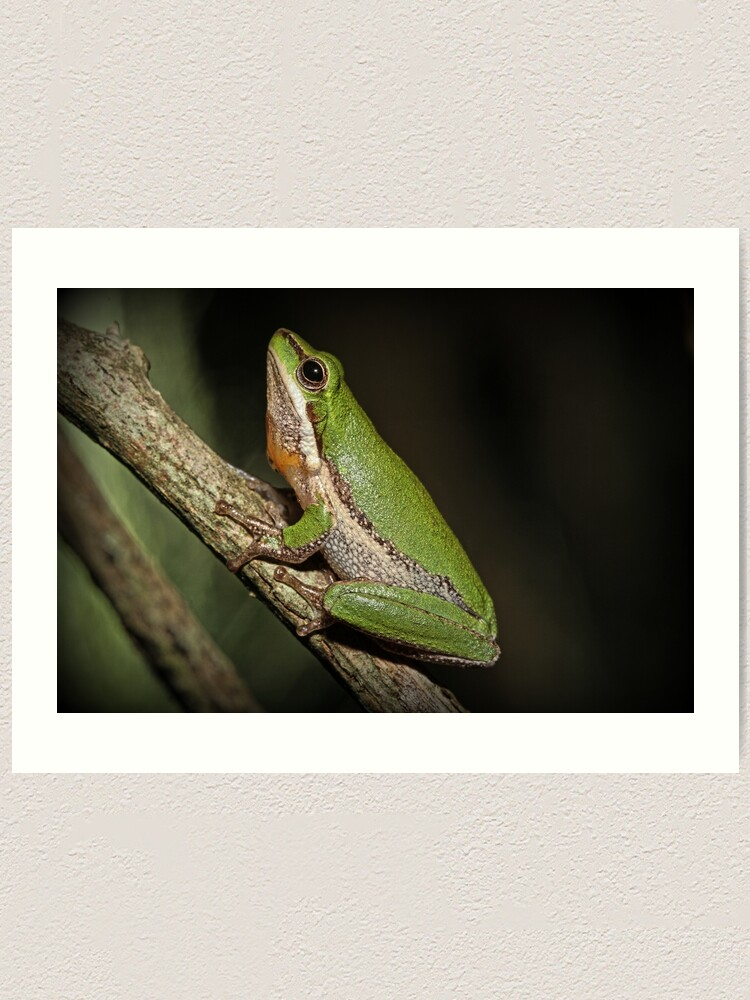 Alternate view of Frog on Branch Art Print