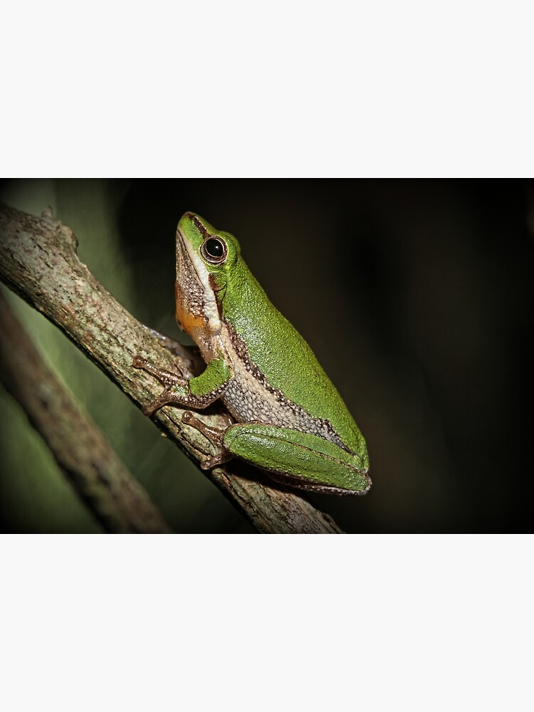Frog on Branch by theoddshot