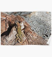 Lizard camouflage. Poster