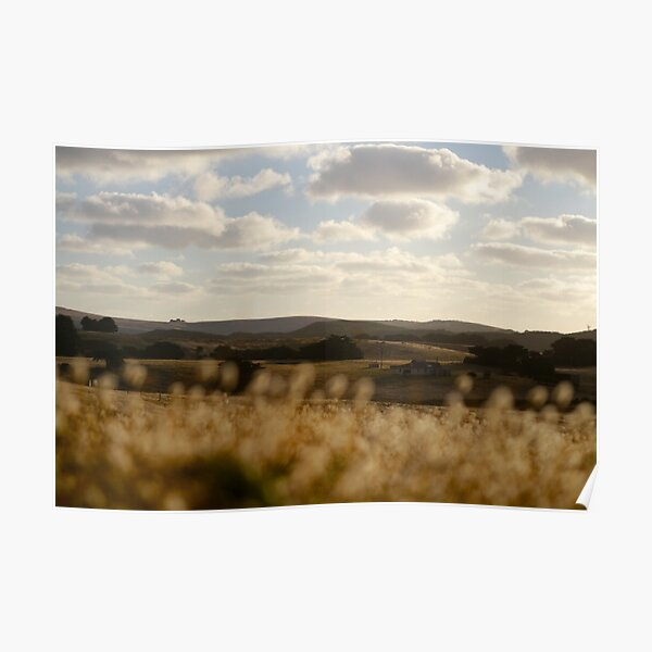 Sun Parched Fields of Bridgewater Bay Poster