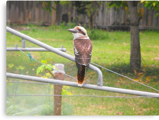 My Morning Visitor by 4spotmore